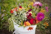 Journée plantes sauvages : herbier et initiation botanique