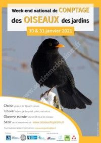 Comptage national des oiseaux des jardins 2021