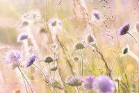 Balade - Découverte des plantes sauvages et de leurs utilisations