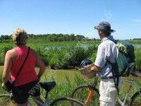 Visite du Capsey (marais de Talais et Grayan) à vélo