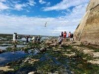 Visite découverte du plateau rocheux du Phare de Cordouan