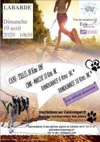 Cani-trail Cani-marche randonnée