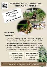 Découverte des plantes sauvages médicinales et comestibles