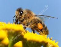 Animation enfants - Le monde des abeilleset de l'apiculture