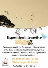 Exposition interactive Plumes et Cie
