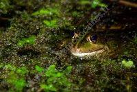 A la recherche des amphibiens !