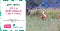 Visite de la Réserve Naturelle de l'Etang de Cousseau
